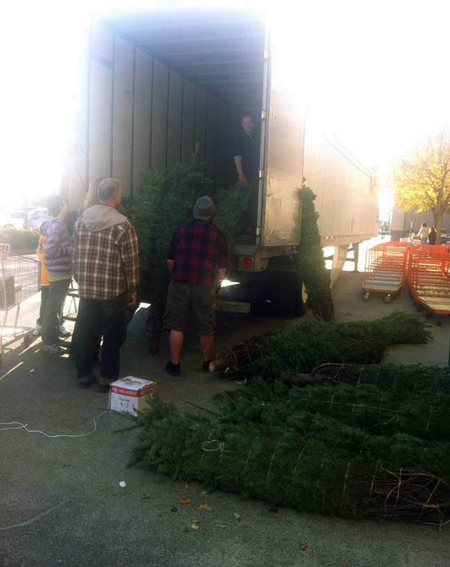 Christmas Trees In Truck