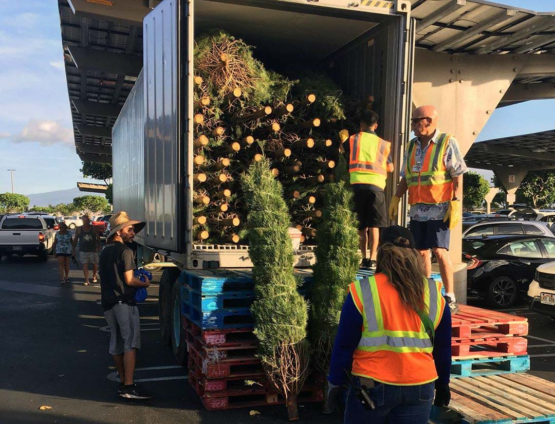 Costco Christmas Tree Trailer
